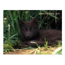 Arctic Fox Kit Wildlife Series # 19 Postcard