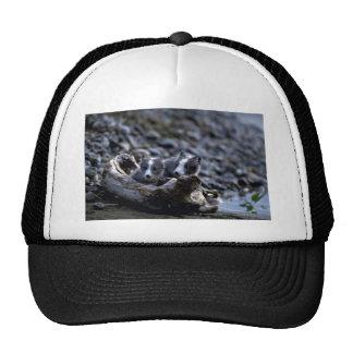 Arctic Fox kits Trucker Hats