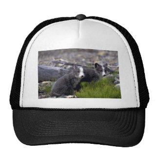 Arctic Fox kits Hat