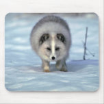 Arctic Fox on snow Mouse Pads