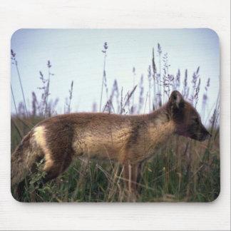 Arctic Fox on summer tundra Mouse Pad