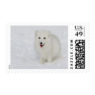 Arctic Fox Postage