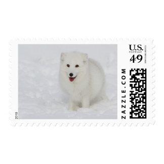 Arctic Fox Postage Stamps