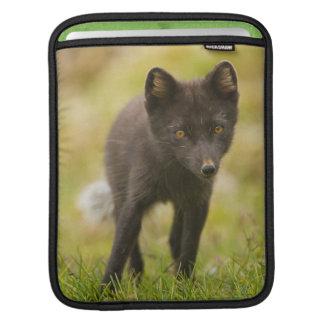 Arctic fox searches for food iPad sleeve