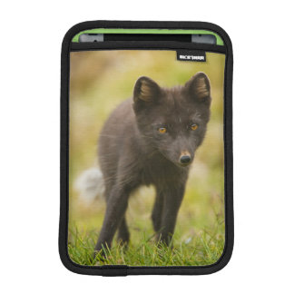 Arctic fox searches for food sleeve for iPad mini