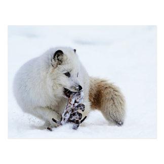 Arctic Fox - Snacking Postcard