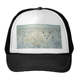 Arctic Fox Trucker Hat