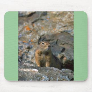 Arctic Ground Squirrel Mousepad