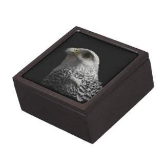 Arctic Gyrfalcon Portrait Painting Jewelry Box