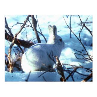 Arctic Hare in Snow Postcard
