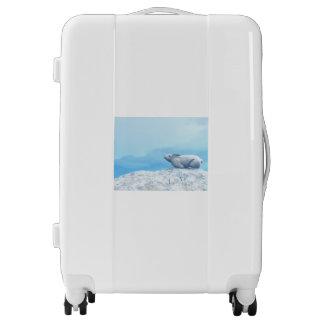 Arctic hare, lepus arcticus, or polar rabbit luggage