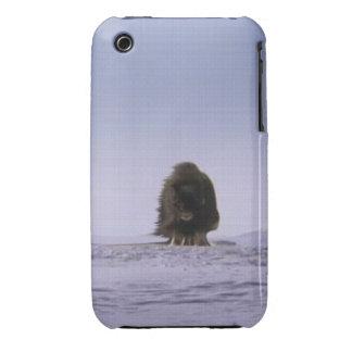 Arctic Musk Oxen Sacred Bovines Wildlife Art iPhone 3 Case-Mate Cases