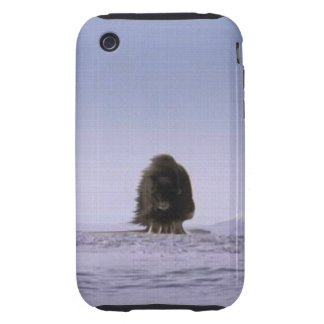 Arctic Musk Oxen Sacred Bovines Wildlife Art iPhone 3 Tough Covers