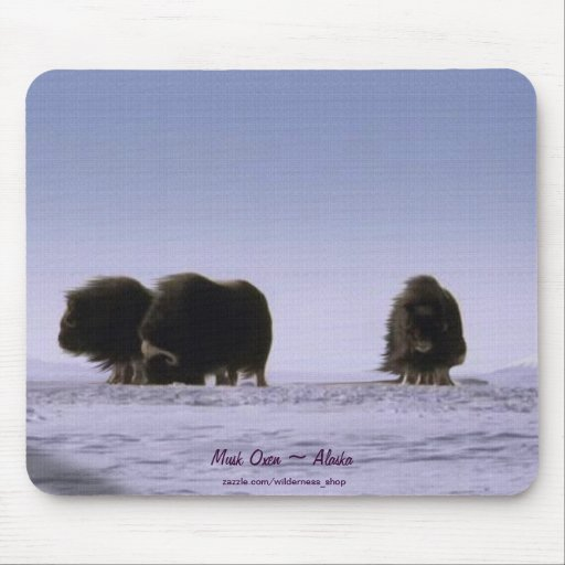 Arctic Musk Oxen Sacred Bovines Wildlife Art Mouse Pad
