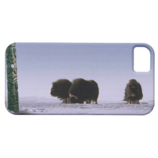 Arctic Musk Oxen & Totem Pole Bovines Wildlife Art iPhone 5 Cover