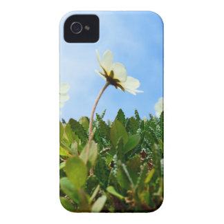 Arctic Poppies flowers iPhone 4 Case-Mate Cases