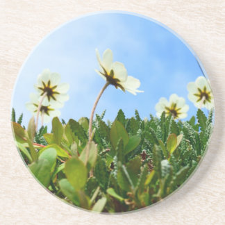 Arctic Poppies flowers Drink Coaster