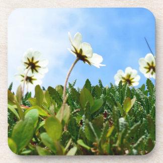 Arctic Poppies flowers Beverage Coasters