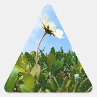 Arctic Poppies flowers Triangle Sticker