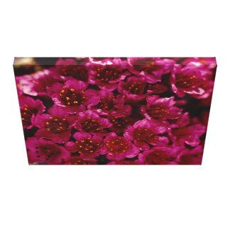 Arctic Purple Saxifrage Flower Photo Designed Canvas Print