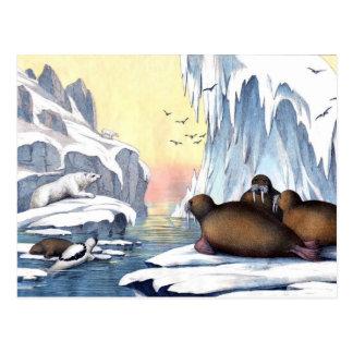 Arctic Scene Polar Bear Walruses Seals Postcard