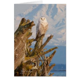 Arctic Snowy Owl, beach drift wood and mountain. Card