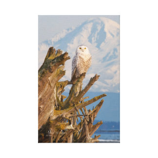 Arctic Snowy Owl, Beach driftwood and Mt. Baker Gallery Wrapped Canvas