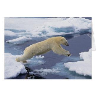 Arctic, Svalbard, Polar Bear extending and Greeting Card