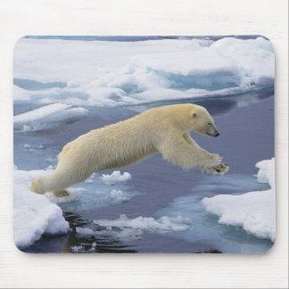 Arctic, Svalbard, Polar Bear extending and Mouse Pad
