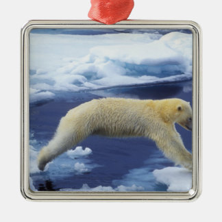 Arctic, Svalbard, Polar Bear hovering with all Metal Ornament