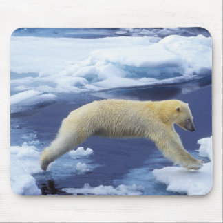 Arctic, Svalbard, Polar Bear hovering with all Mouse Pad