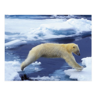 Arctic, Svalbard, Polar Bear hovering with all Postcard