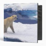 Arctic, Svalbard, Walrus being freindly 3 Ring Binders