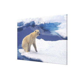Arctic, Svalbard, Walrus being freindly Canvas Print