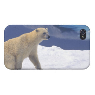 Arctic, Svalbard, Walrus being freindly iPhone 4/4S Cases