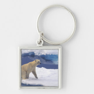 Arctic, Svalbard, Walrus being freindly Keychain