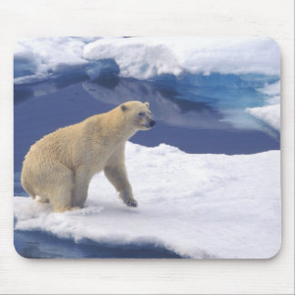 Arctic, Svalbard, Walrus being freindly Mouse Pad