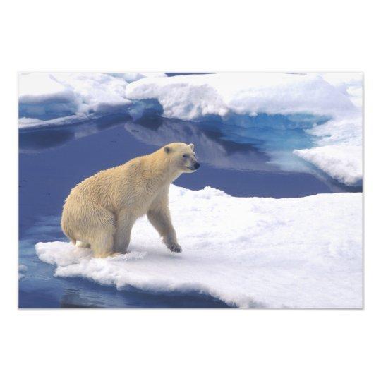 Arctic, Svalbard, Walrus being freindly Photo Print