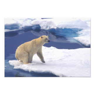 Arctic, Svalbard, Walrus being freindly Photo Print