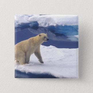 Arctic, Svalbard, Walrus being freindly Pinback Button