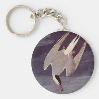 Arctic Tern by John James Audubon, Vintage Birds Keychain