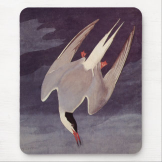 Arctic Tern by John James Audubon, Vintage Birds Mouse Pad