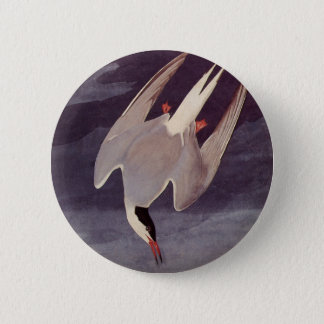 Arctic Tern by John James Audubon, Vintage Birds Pinback Button