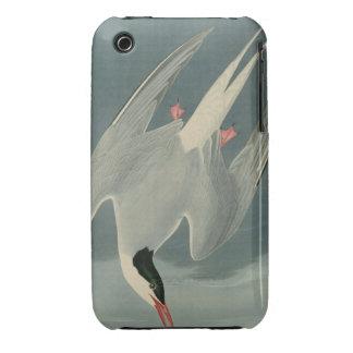Arctic Tern iPhone 3 Covers