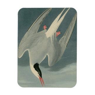 Arctic Tern Magnet
