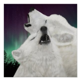 Arctic White Wolves Glossy Poster Print