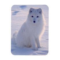 Arctic Winter Fox Photo Designed Magnet