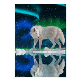 Arctic Wolf, Aurora Wildlife Art Poster