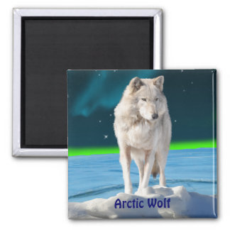 Arctic Wolf & Aurora Wildlife Collection Magnet
