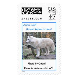 Arctic wolf (Canis lupus arctos) Postage Stamp
